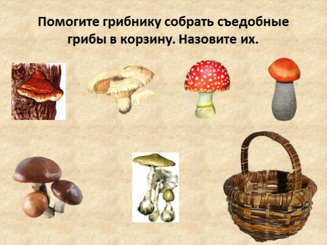 Лес дружелюбно и приветливо принимает всех в своих владениях: гульназ ахмировна аллаярова 5 июня в  если тушат капусту, то это — какая капуста?