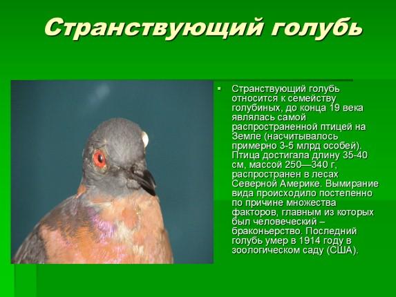 приеме вымершие птицы красной книги стиральную машину для
