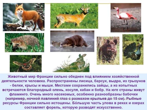 Животный мир природы россии