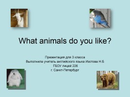What animals do you like?