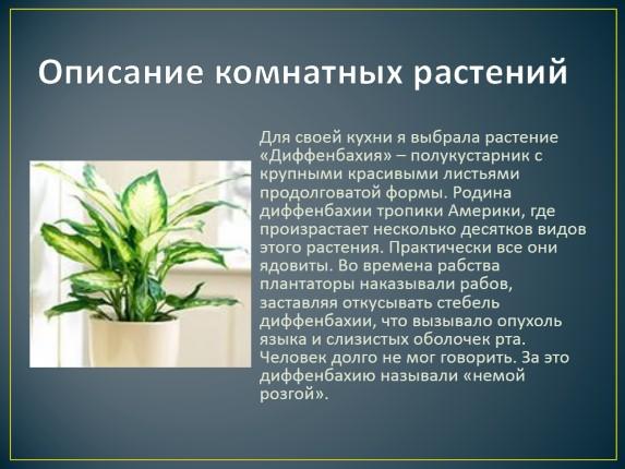 Описание домашних цветов описание