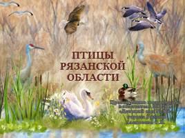 Птицы Рязанской области, слайд 1