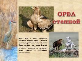 Птицы Рязанской области, слайд 2