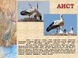 Птицы Рязанской области, слайд 8