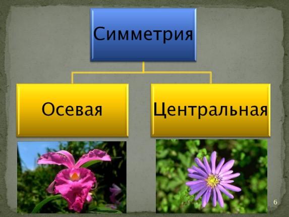 Презентация о симметрии во круг нас