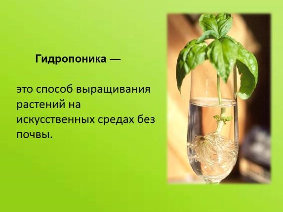 Выращивание без почвы 49