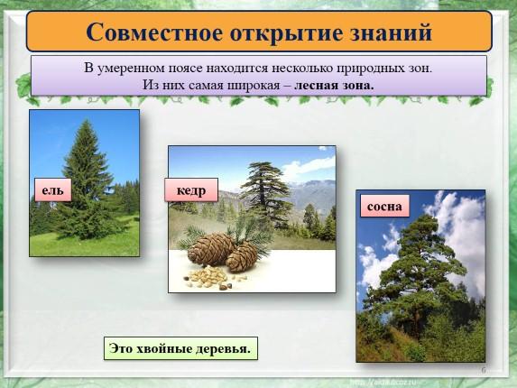леса умеренного пояса презентация