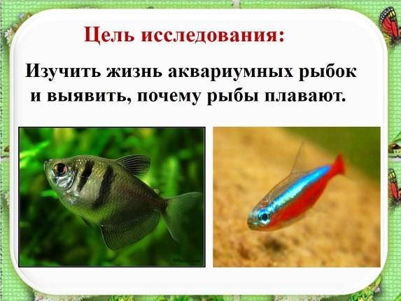 Презентацию на тему аквариумные рыбки