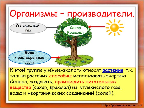 Презентацию на тему великий круговорот жизни 3 класс